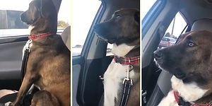 Бесценная реакция пса, который обиделся на хозяйку за поход к зубному