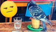 50 cлучаев, когда птицы повели себя как самые настоящие засранцы