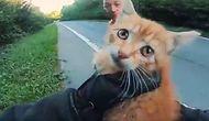 Yolun Ortasında Kalan Kediyi Kurtaran Güzel İnsanlar!
