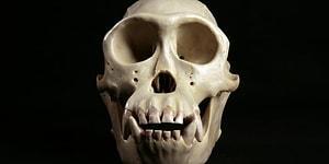 Тест: Сможете ли вы угадать животное по черепу?