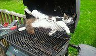 40+ доказательств того, что котики могут заснуть в самой неожиданной позе и в самых неподходящих местах