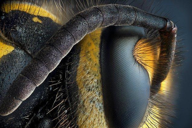 Antenleriyle birlikte muhteşem bir arı portresi. 😍
