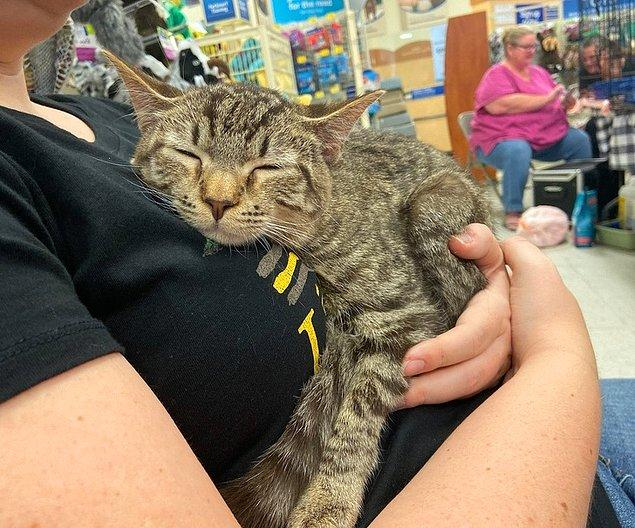 2. Bu sahipsiz kedi, kendi sahibini seçti.
