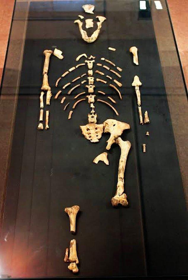 1974 - Etiyopya'da 3.2 milyon yıl önce yaşamış bir insanın iskeleti keşfedildi, buna Lucy (Australopithecus) adı verildi.