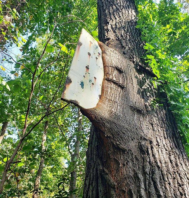 13. Büyürken tabelayı yutan ağaç.