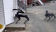 Роботы-собаки от Boston Dynamics присоединились к полицейскому отряду по обезвреживанию бомб