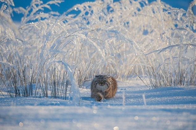 10 лучших фотографий дикой природы за 2019 год