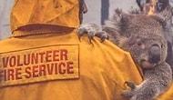 Полмиллиарда животных погибли во время пожаров в Австралии