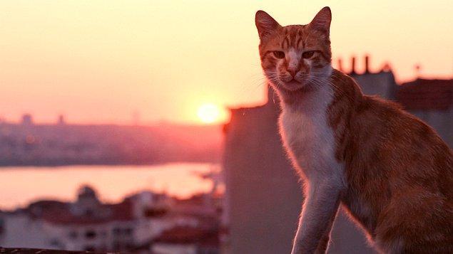 """7. """"Hukuk sekreteri olarak çalışıyordum ve birinin kedisini birçok insana bırakmam gerekmişti ama aynı zamanda kediler adına birçok farklı organizasyona para da bırakmam gerekiyordu. Kedilerden birinin adı Bay Bobo'ydu. Oldukça keyif almıştım."""""""