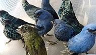 В аэропорту Перу задержан мужчина, который перевозил 20 редких птиц в чемодане