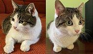 В Новороссийске продается необычная кошка за 20 млн рублей