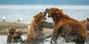 """Победители конкурса """"Дикая природа России—2019"""" National Geographic"""