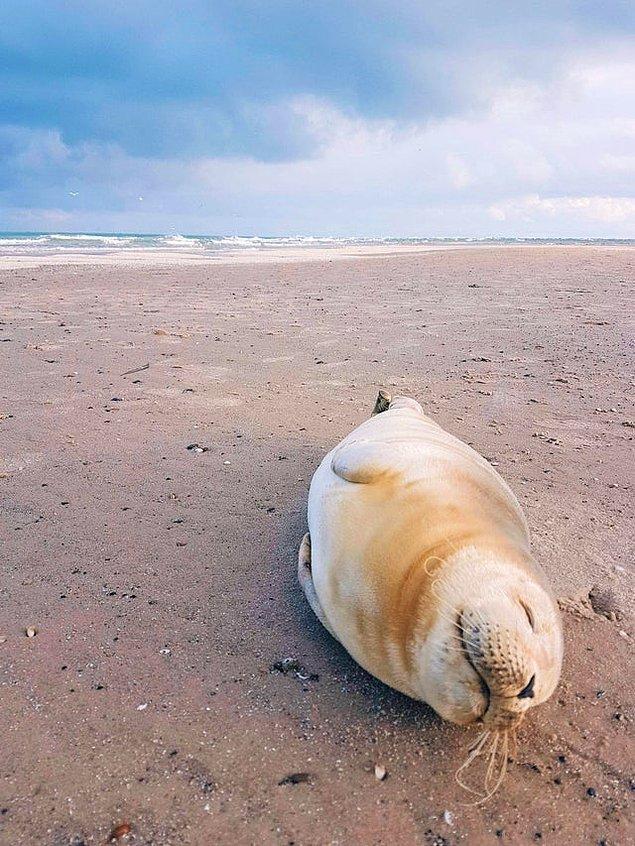 7. Danimarka'da bir plajda çekilmiş 👇