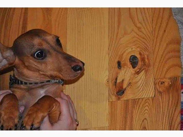 15. Evde köpeğinden esintiler isteyenlere özel parke hizmeti.