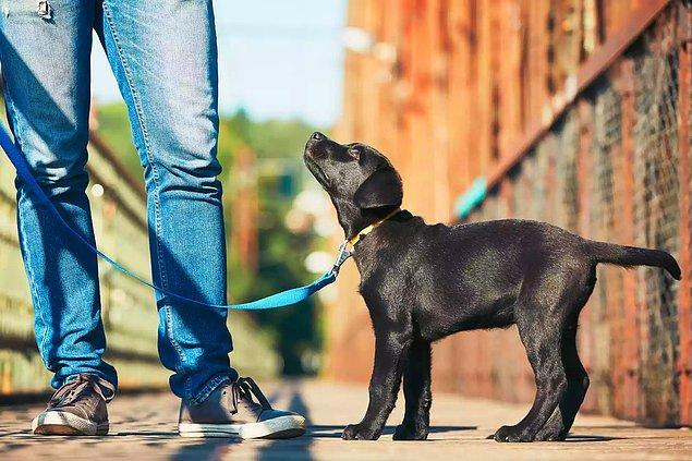 Hayatınıza yeni bir köpek alıyor veya ailesi olduğunuz bir köpeği daha çok eğitmek istiyorsanız, öncelikle onun ihtiyaçlarını da göz önünde bulundurmayı unutmayın.