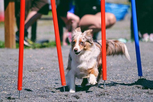 Köpeğiniz için seçtiğiniz isim de önemli! Köpekler iki heceli isimleri daha kolay öğrenir ve hatırlarlar.