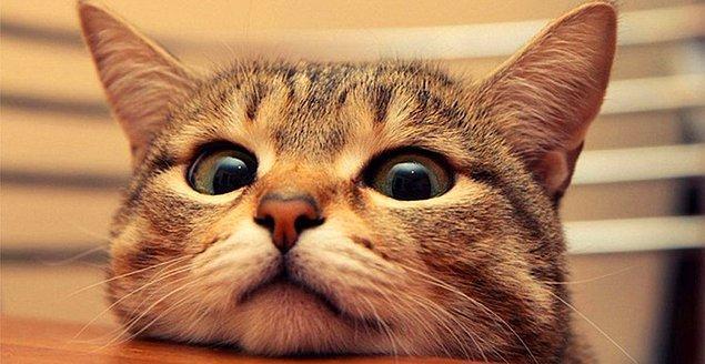 10. İslam'da kediler hem temiz oldukları hem de Hz. Muhammed tarafından sevildikleri için önemsenirler.