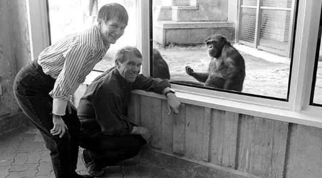 İnsan dilini kavrayan ilk şempanze Washoe'nun çarpıcı hayat öyküsünü duymuş muydunuz?