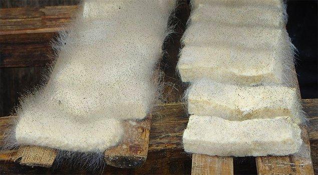12. Küflü tofu
