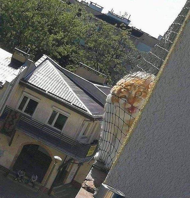 5. Komşunun kedisi ne olursa olsun seni bulmakta kararlıysa...