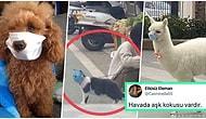 Кошка в маске, демонстрирующая масштабы катастрофы коронавируса в Китае, стала мемом в Сети