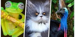 17 видов эксцентричных животных, в существование которых верится с трудом