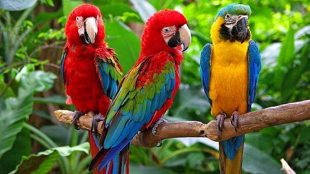 14. Başkan Andrew Johnson'ın papağanı çok küfrettiği için başkanın cenazesinden kovulmuştu.