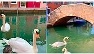 Плюсы коронавируса: каналы Венеции еще никогда не были такими чистыми