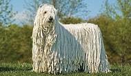 10 удивительных пород собак, предназначенных не только для красоты