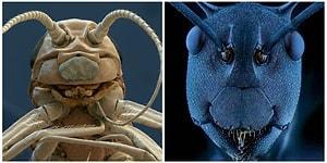 Монстры из ужастиков бы позавидовали или Как выглядят насекомые под микроскопом