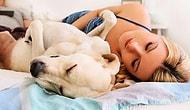 10 способов быстро уснуть (если считание овец не помогает)