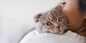 Второй случай: кошка в Гонконге заразилась коронавирусом от своего хозяина
