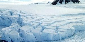 Ученые обнаружили, что 90 миллионов лет назад на Антарктиде был тропический лес