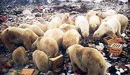 16 невинных животных, которые расплачиваются за беспечное отношение людей к нашей планете