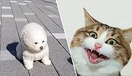 20 видео с животными, которые немного поднимут вам настроение в дни карантина