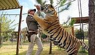 """14 фактов о тиграх в неволе, которые должен знать каждый, кто смотрит сериал """"Король тигров"""""""