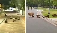 Уникальные кадры: животные наслаждаются пустыми улицами во время того, как люди закрылись в своих домах