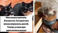 35 фото кошек, которые заставят вас улыбнуться