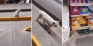 Бродячая кошка повела посетителя продуктового магазина в отдел корма для кошек