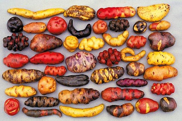 9. Peru'da bulunan farklı patates türleri: