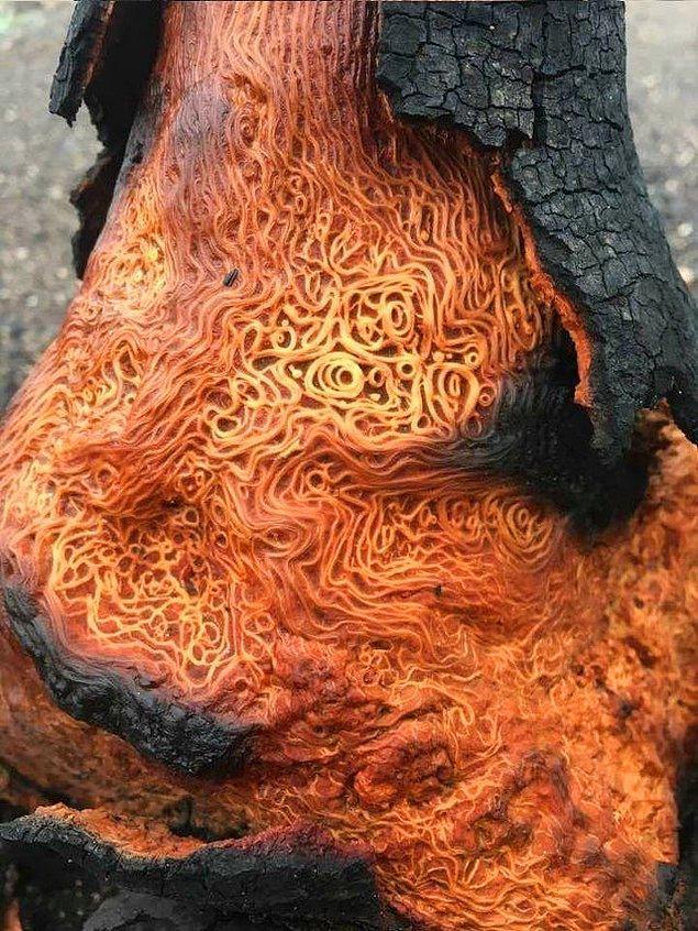 14. Ağacın yapısına bakar mısınız? Spaghetti'ye benziyor.