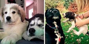 30 собак, которые потеряли свою идеальную жизнь после того, как в доме появился новый щенок