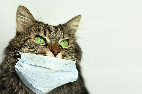 В России у кошки обнаружен коронавирус