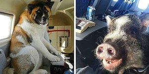 12 странных попутчиков, которых можно встретить в самолете