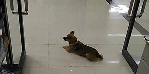 Верный пес месяцами ждал рядом с больницей  своего хозяина, который умер от коронавируса