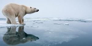 Шестое массовое вымирание на Земле может произойти раньше, чем ожидалось