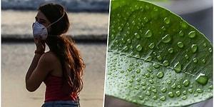 Новые исследования показали, что влажный воздух может быть предотвратить распространение коронавируса