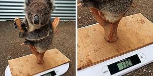 35 хитростей, которые используют работники по уходу за животными, чтобы узнать их вес