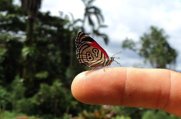 10. Bu kelebeğin adı 89'98 kelebeğidir.