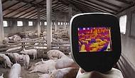 В Китае обнаружен новый тип свиного гриппа, способный вызвать пандемию